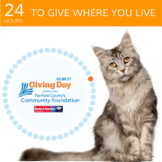 Cat and Giving Day Logo 2017 Square