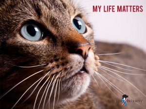 Cat with tag line My Life Matters