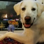 Happy Tails photo of dog Nikita