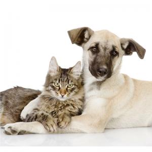Shepherd dog hugging a tabby cat